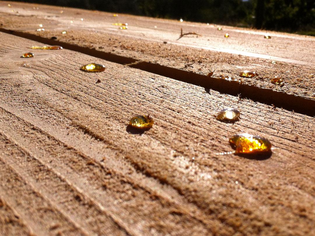 En Sud Ardèche, on valorise et transforme le bois local