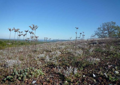 depierresetdebois-hameaudesbuis28-toiture-vegetalise-sedum-arrosage