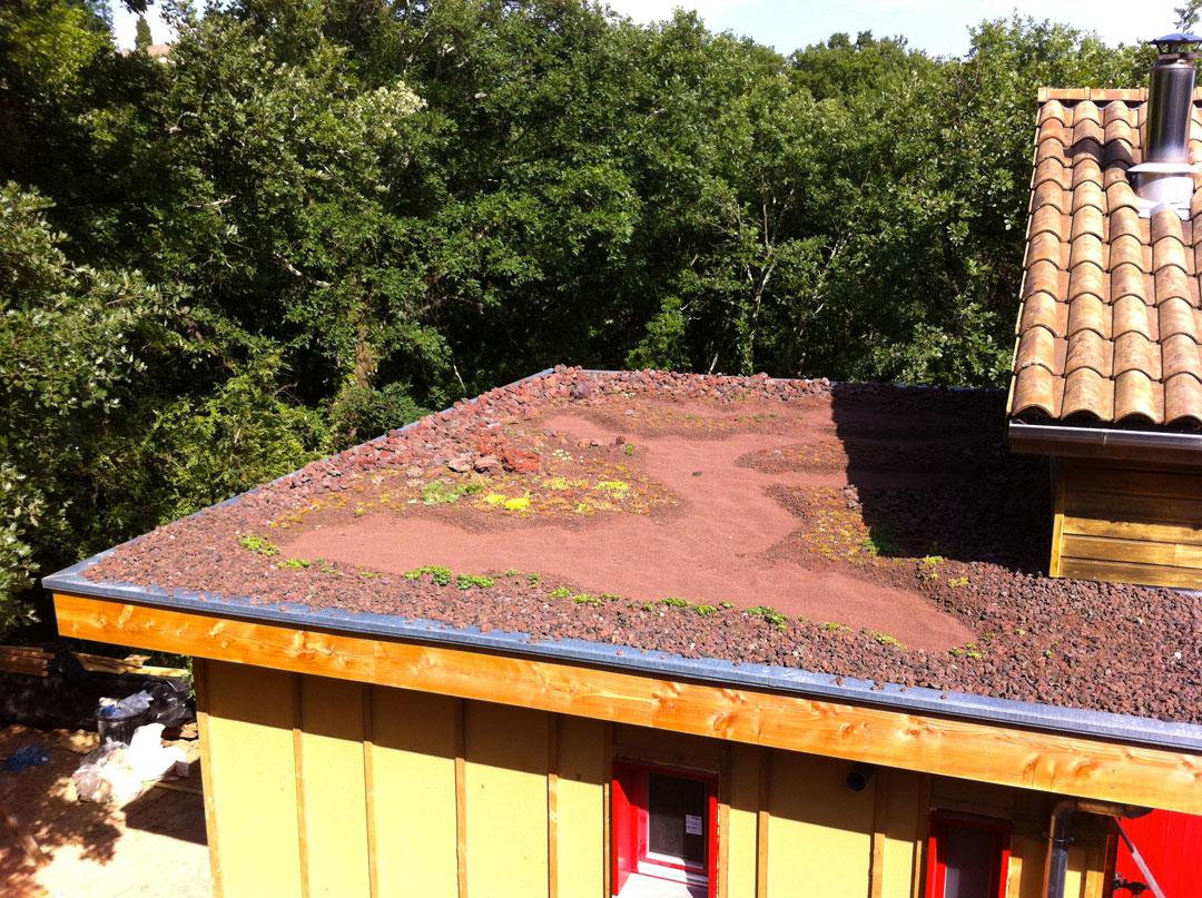Extension bois et toiture plate végétalisée